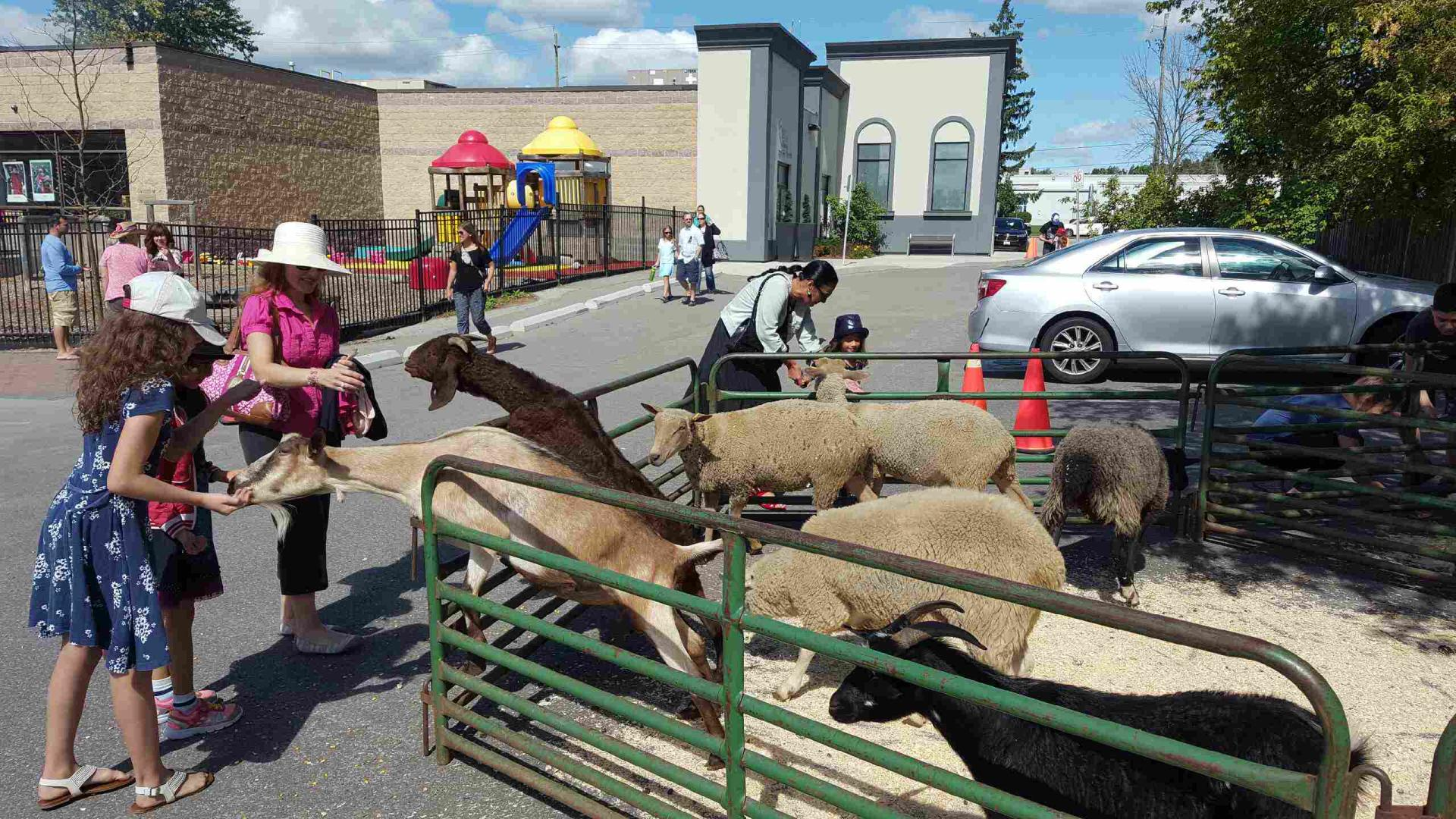 Petting Zoo for Mississauga and Toronto