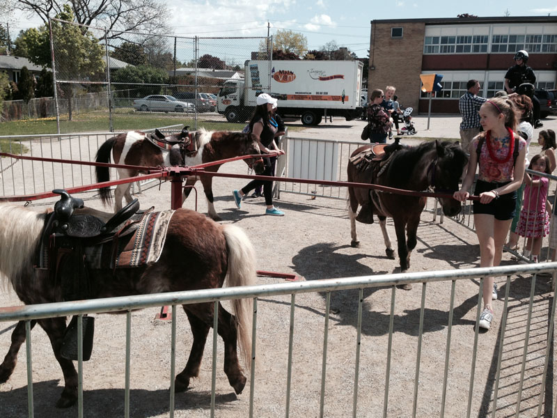 Pony Rides for Mississauga and Toronto